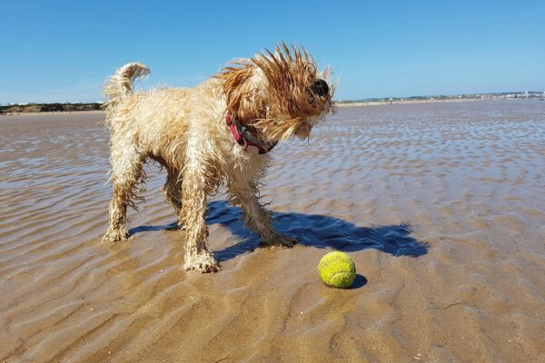 5 Big Reasons To Opt For The Pet-friendly Vacations